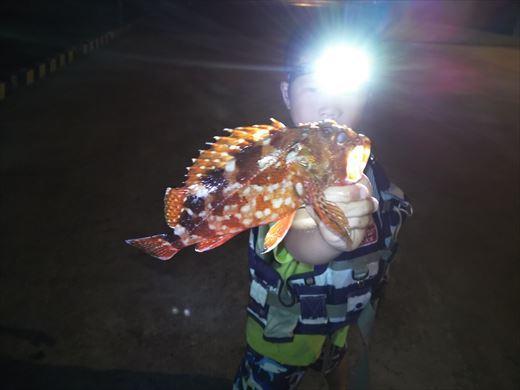 1日目の野伏港夜釣り (7)