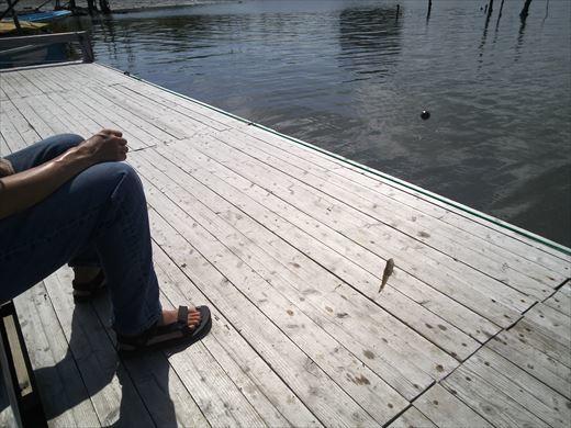 マイクロタックルで釣りに行こう (34)
