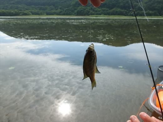 まだ釣るのか・・・ (2)