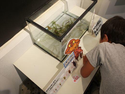 アクアマリンいなわしろカワセミ水族館 (7)