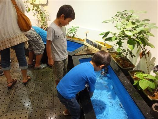 アクアマリンいなわしろカワセミ水族館 (8)