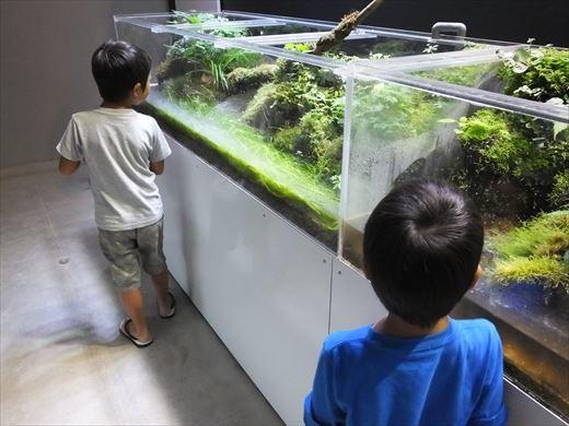 アクアマリンいなわしろカワセミ水族館 (13)