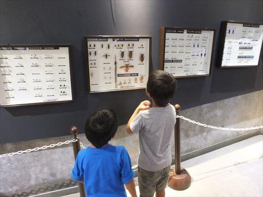 アクアマリンいなわしろカワセミ水族館 (14)