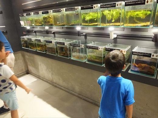 アクアマリンいなわしろカワセミ水族館 (18)