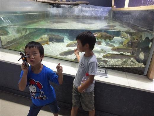 アクアマリンいなわしろカワセミ水族館 (19)