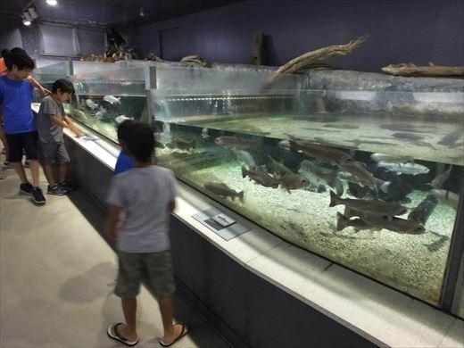 アクアマリンいなわしろカワセミ水族館 (20)