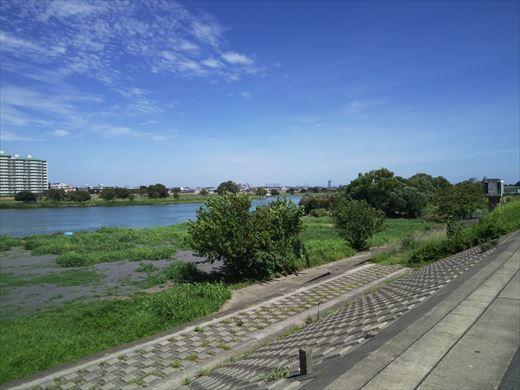 多摩川登戸釣り (4)