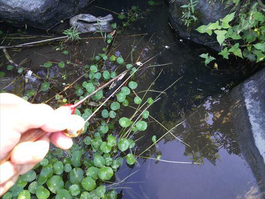 多摩川登戸釣り (15)