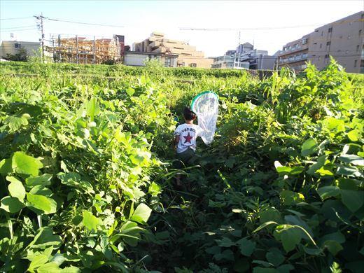 多摩川登戸釣り (19)