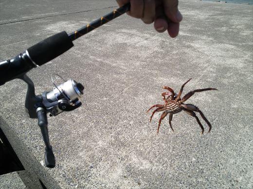 銚子へ釣りに行く (38)