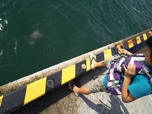 ①葉山港に釣り (23)