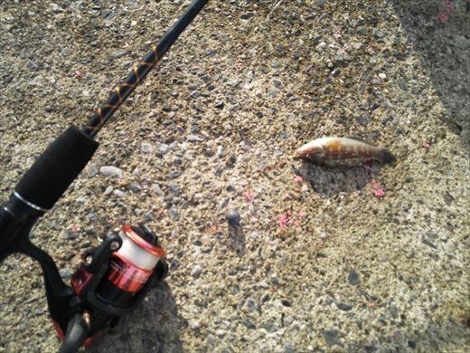 ①葉山港に釣り (25)