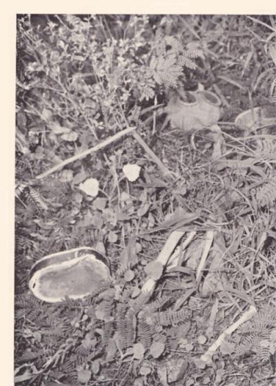 硫黄島遺骨