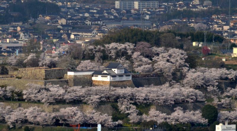 鶴山公園遠景