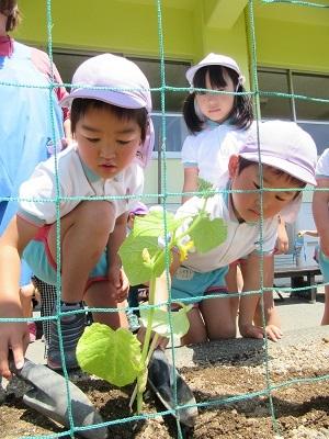 2018年長野菜苗植え (2)