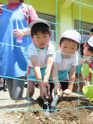 2018年長野菜苗植え (3)