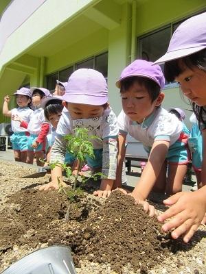 2018年長野菜苗植え (4)