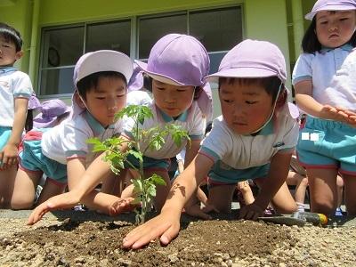 2018年長野菜苗植え (7)