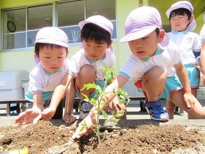 2018年長野菜苗植え (8)