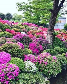 2017-4-17根津神社