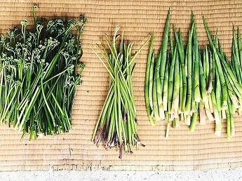 2018-6-15山菜