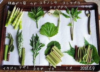 2018-6-15山菜2