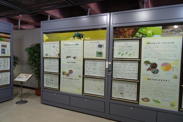 蜂の展示会20180802