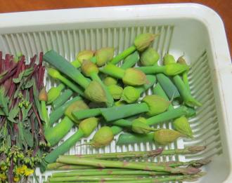 ネギ坊主の収穫物