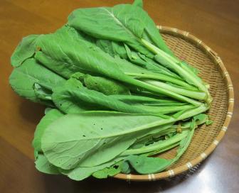 収穫物サラダ用コマツナ