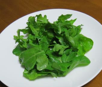 ルッコラ生野菜サラダ利用直前