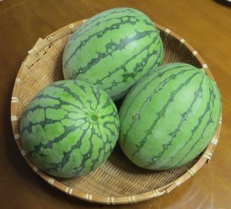 小玉スイカ収穫物