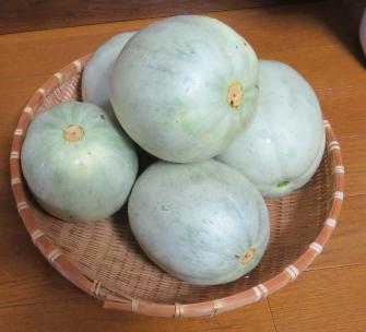メロン収穫物
