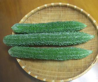 アバシゴーヤ収穫物