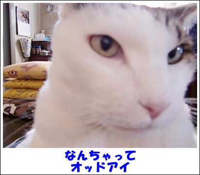 CIMG8268.jpg