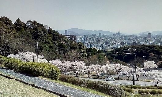 ☀😃❗お花見🌸🌸_180411_0007 - コピー