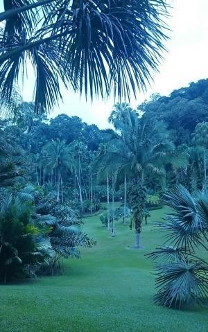 シンガポール植物園20180804