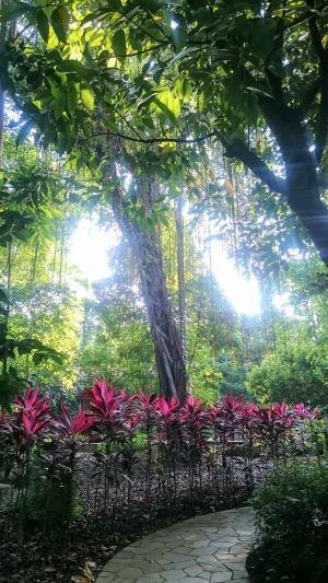 シンガポール植物園(12)20180806