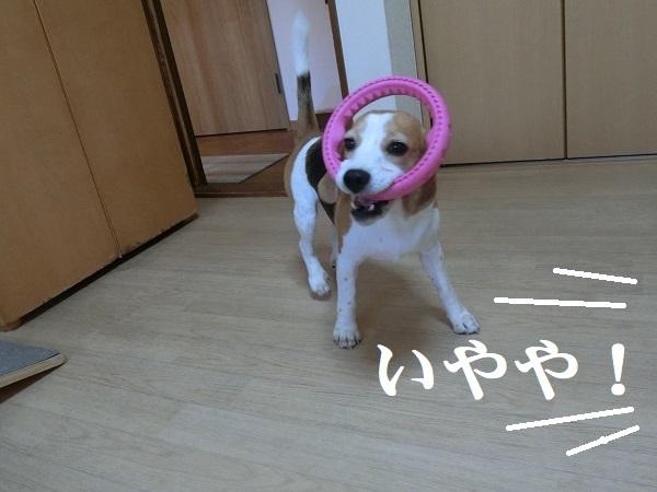 CIMG3641②