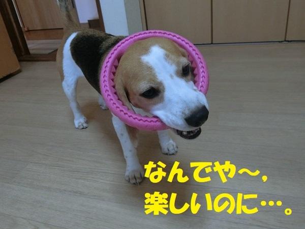 CIMG3612③