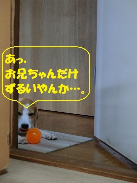CIMG5590②