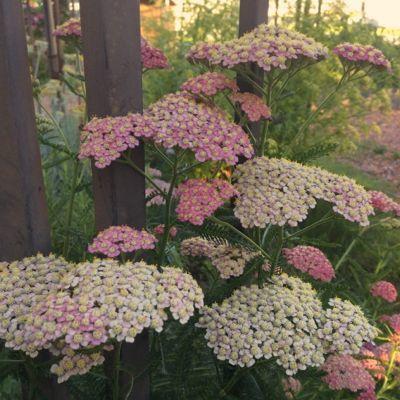 180612-花