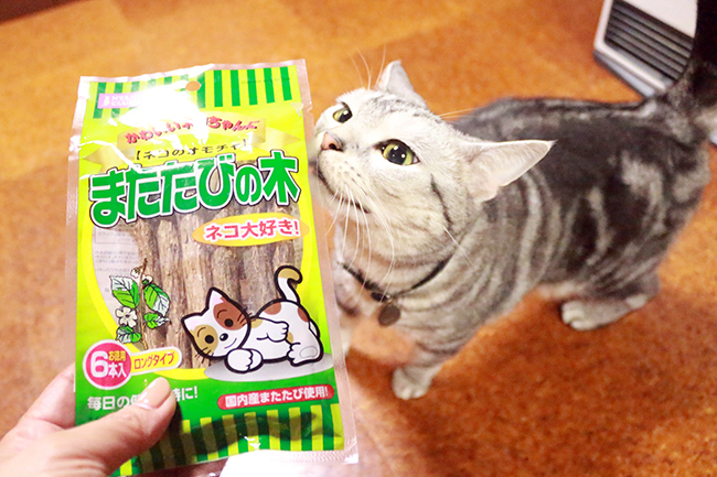 blog_000011665.jpg