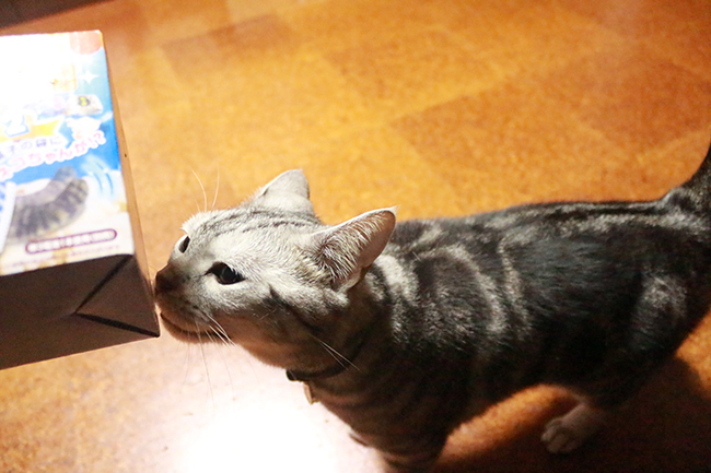 blog_000011811.jpg