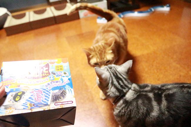 blog_000011812.jpg