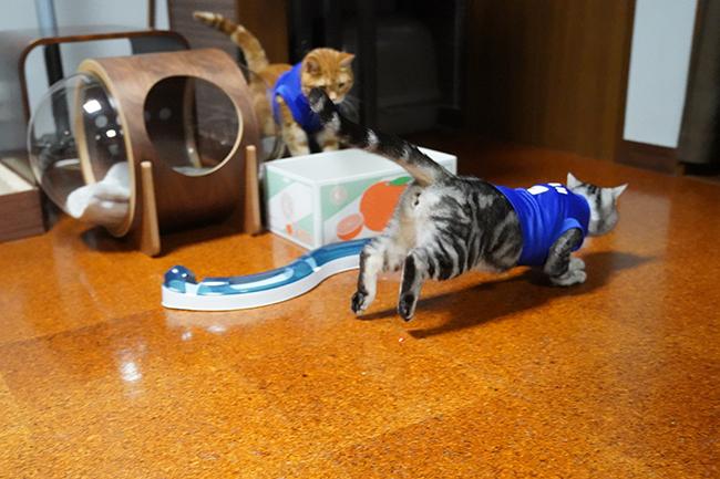 blog_000011911.jpg