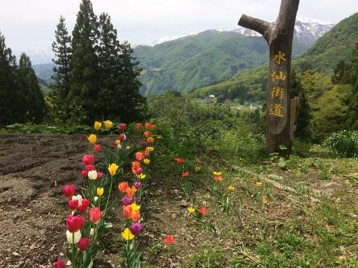 5月6日奉納温泉まで (4) (520x390)