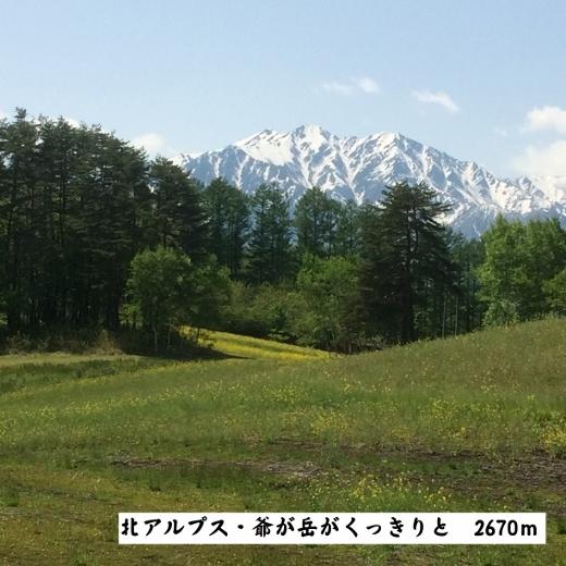 5月14日大町市中山高原 (2) (520x520)