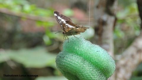 Habitat BOHOL,Bilar,Bohol