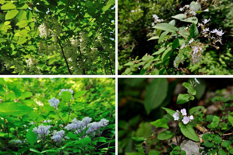 fc20180527flowers.jpg