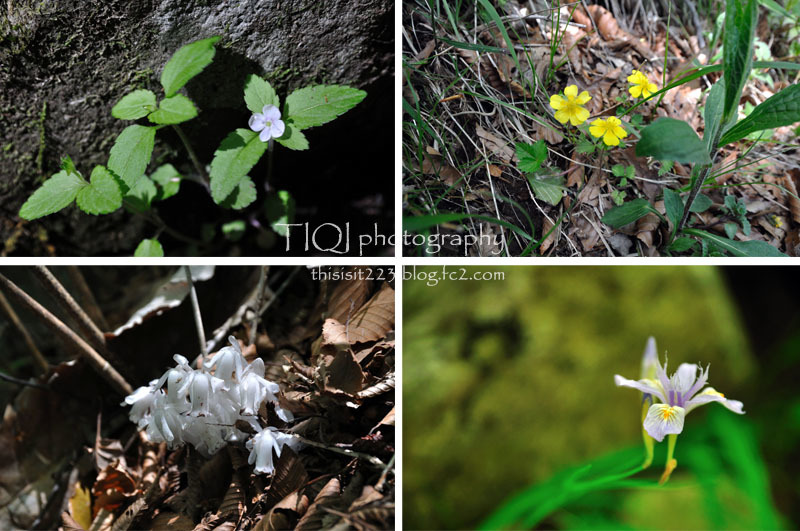 fcflowers4.jpg